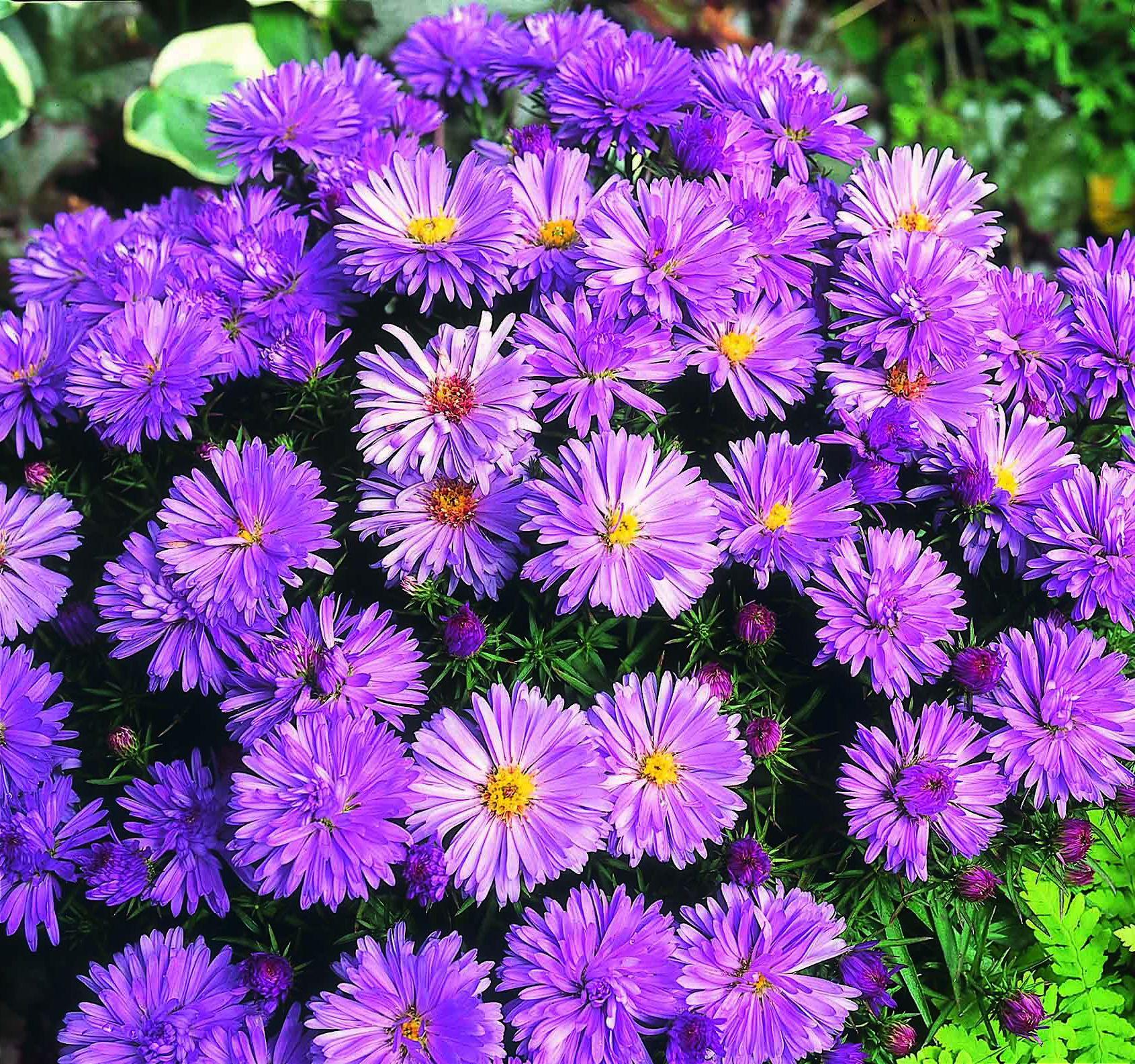 популярные садовые цветы фото с названиями москве отличное место