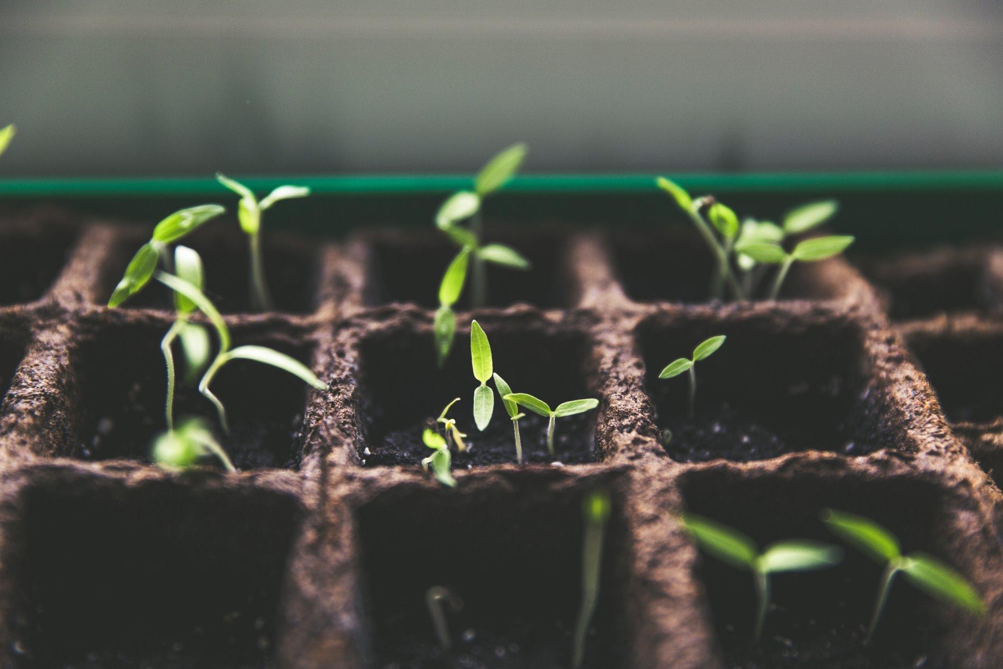 15 полезных советов по подготовке семян к посеву