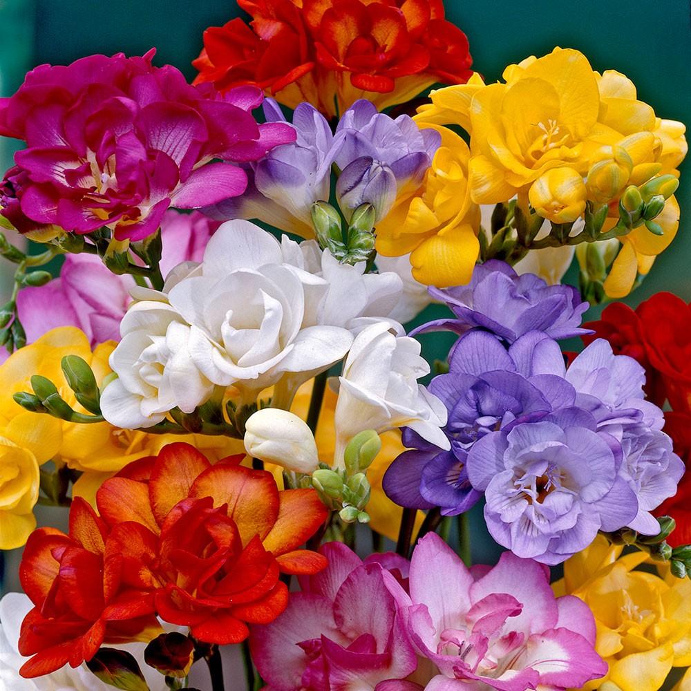 поздравления о семенах цветов боя все поле